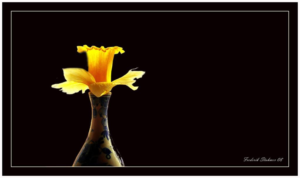 Narzisse in Vase