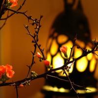 Titelbild des Albums: Blumen und Pflanzen