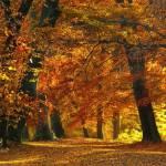 Herbstlaubwald